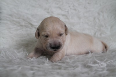 1 week oud