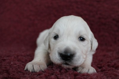 2 week oud