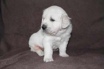 4 weken oud