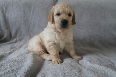 5 weken oud